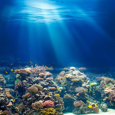 神秘な海底の風景
